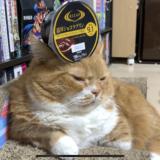 衝撃!バランス感覚がすごい猫!