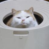 ニャンコ多頭飼いにおすすめのトイレ設備!