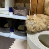 ニオイが少なくて掃除も楽!おすすめの猫砂!