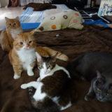 小説「人生を変えた猫」第12話〜第15話