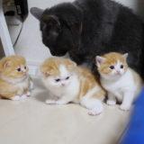 小説「人生を変えた猫」第16話〜第19話