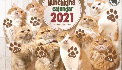 マンチカンズのカレンダー2月用公開!